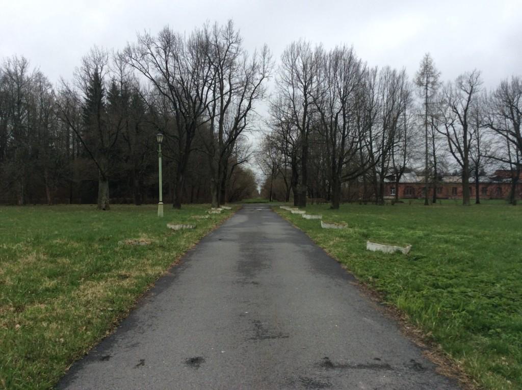 Сиреневая аллея - центр трезубца, отходящего от дворца в сторону Петергофской дороги