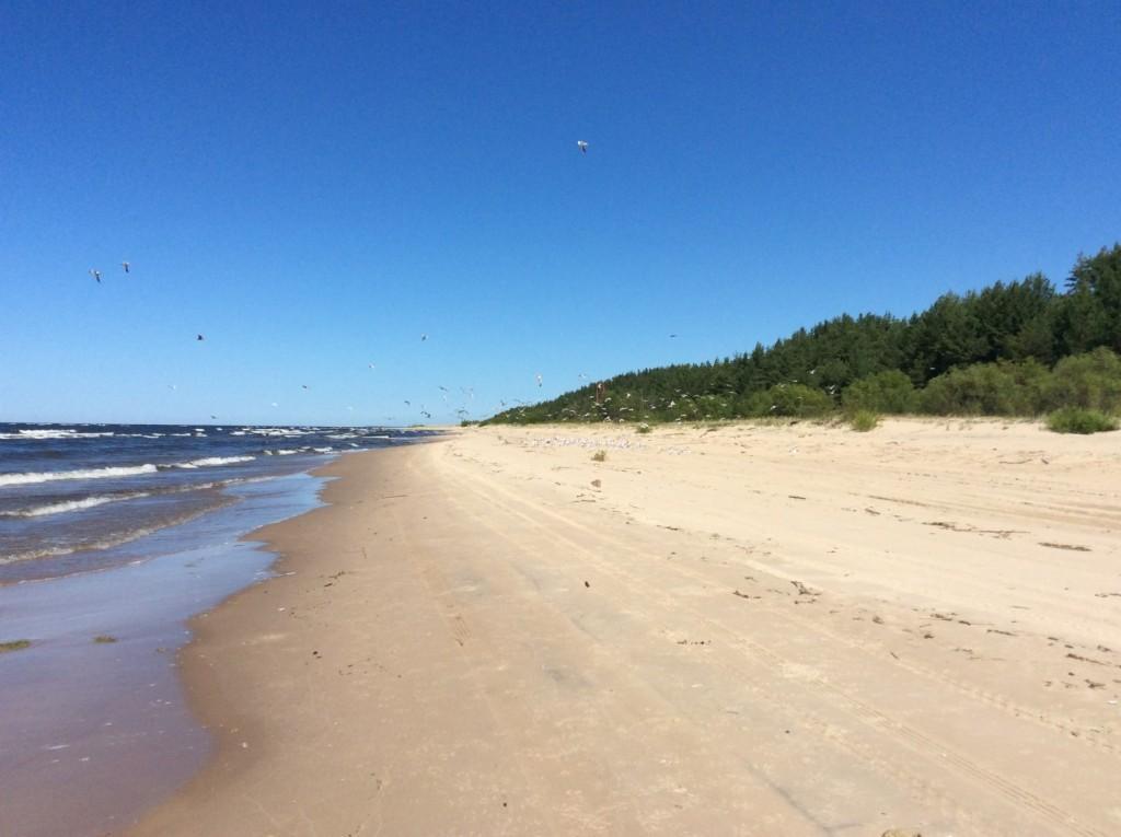 Побережье Нарвского залива. Белые пески уходят за горизонт...