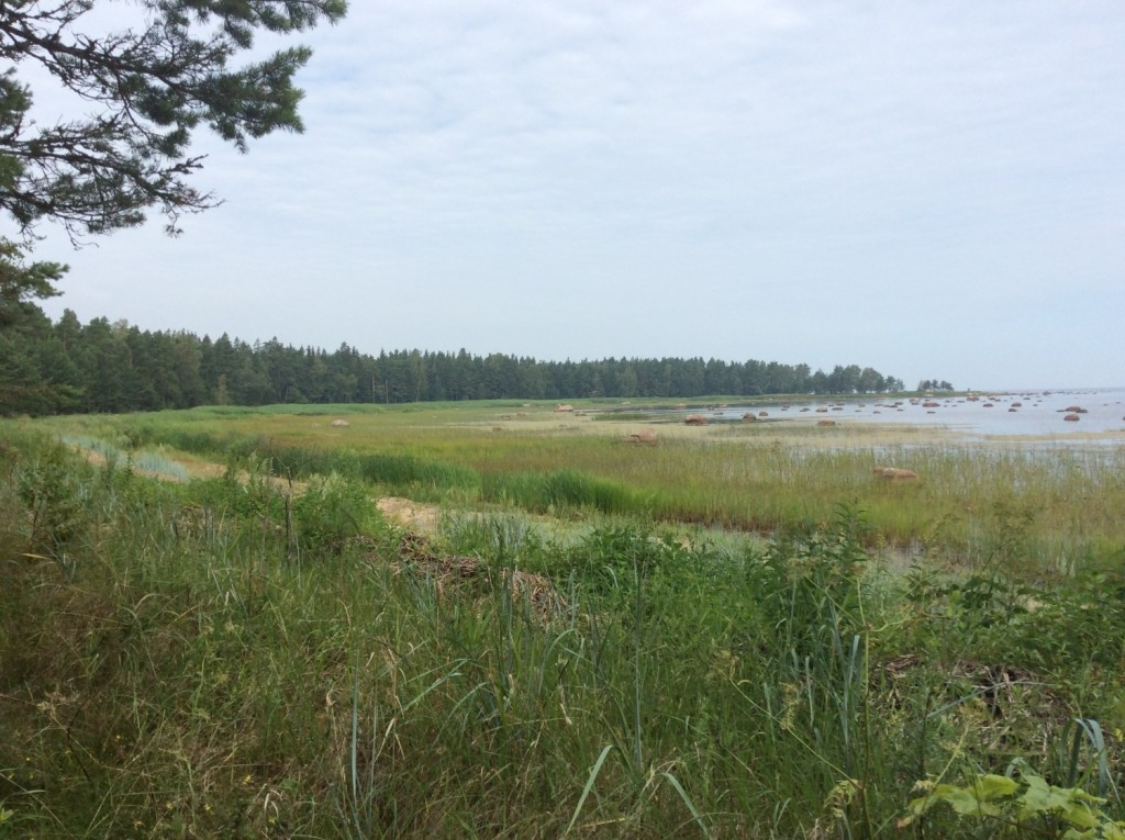 Побережье Финского залива в районе Копорской губы
