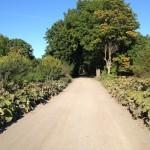 Дорога в усадьбу Штиглица