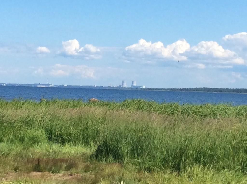 Обильная растительность на мысе Дубовском не мешает лицезреть сооружения Сосновоборской атомной станции