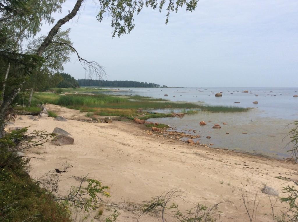 Побережье Финского залива западнее мыса Неннисари