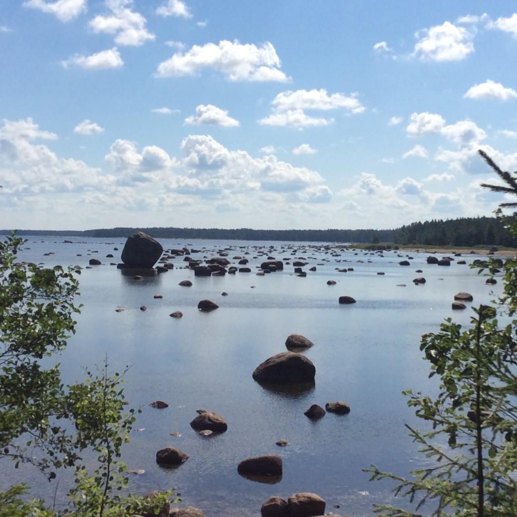 Большая часть прибрежных вод западнее Соснового Бора с избытком насыщена валунами