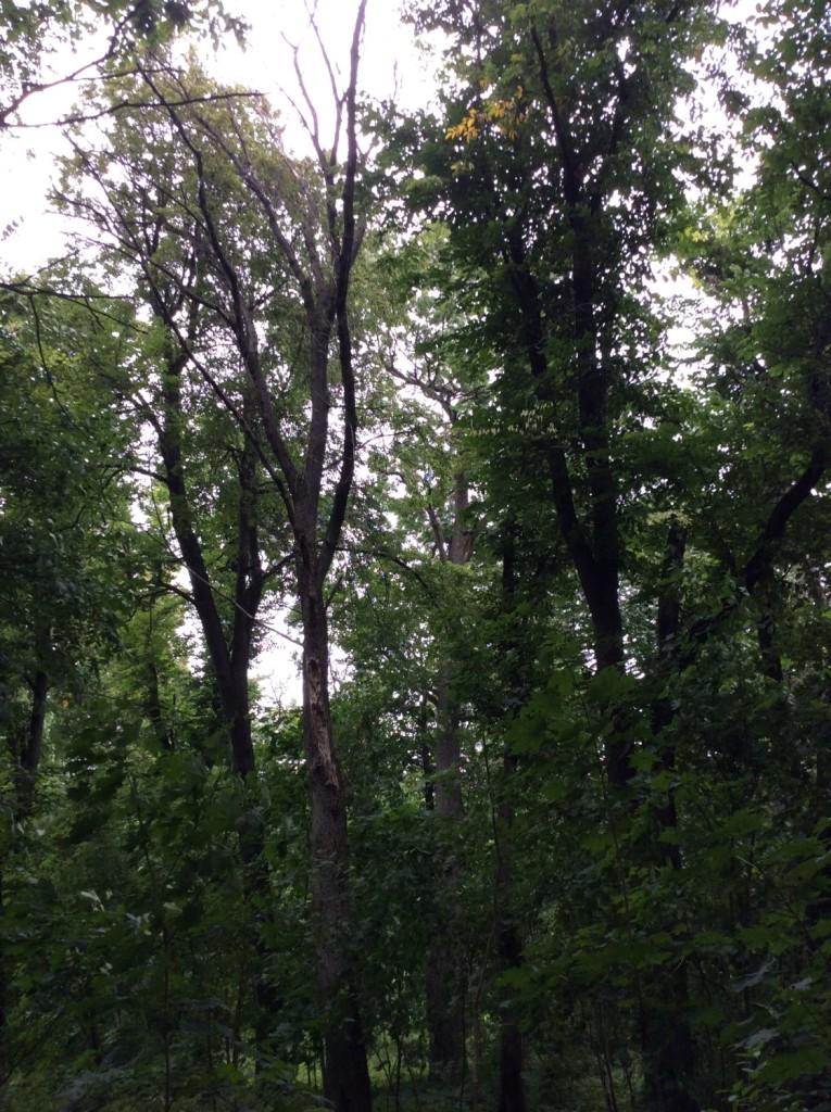 В заброшенном сальском парке еще читаются остатки аллей. Здесь можно встретить и деревья весьма почтенного возраста