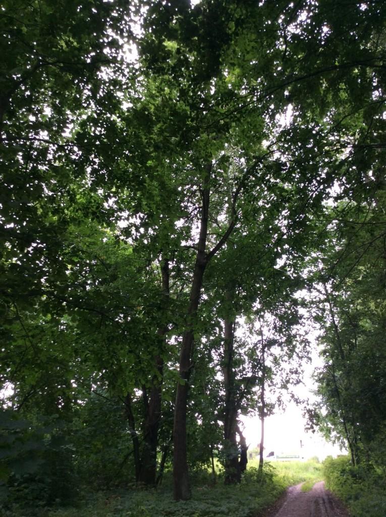 В заброшенном сальском парке еще читаются остатки аллей.