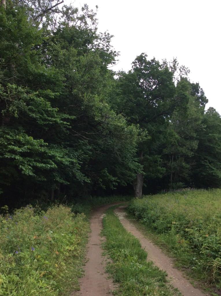 В заброшенном сальском парке еще читаются остатки аллей