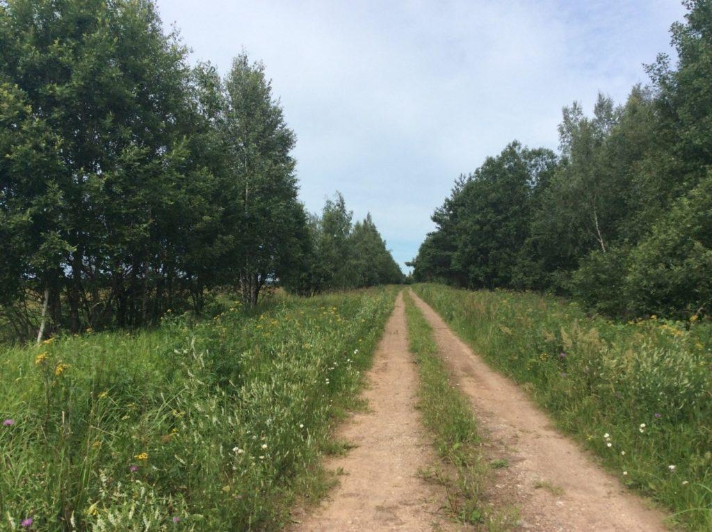 Дорога вдоль Мертвицы.