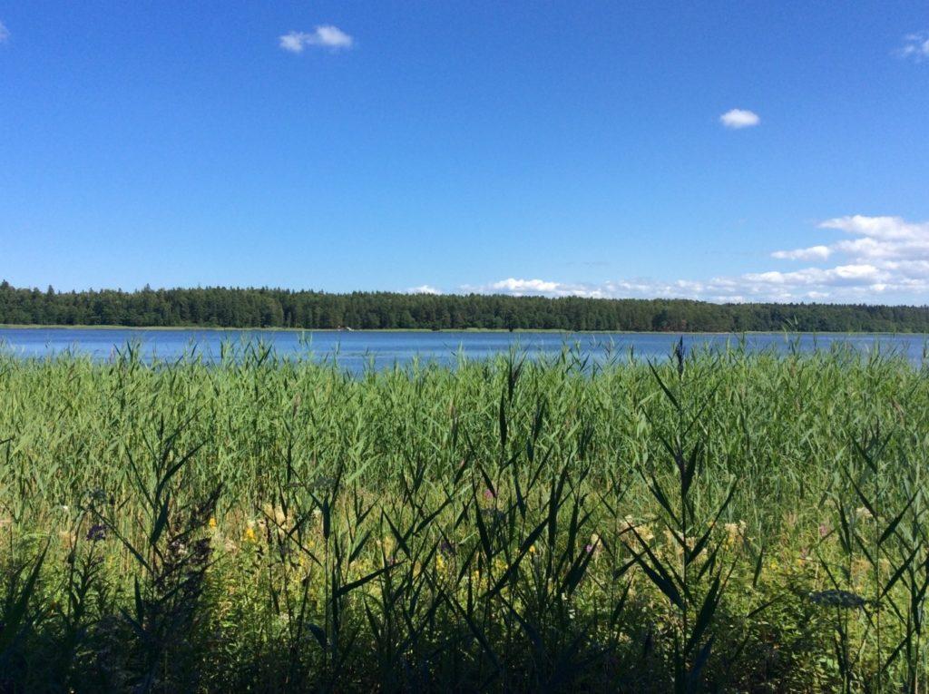 Липовское озеро. Кургальский полуостров. Кингисеппский район.