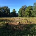 Усадебный парк Штиглица. Место,где располагался усадебный дом.
