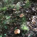 Царство грибов на берегу Наровы