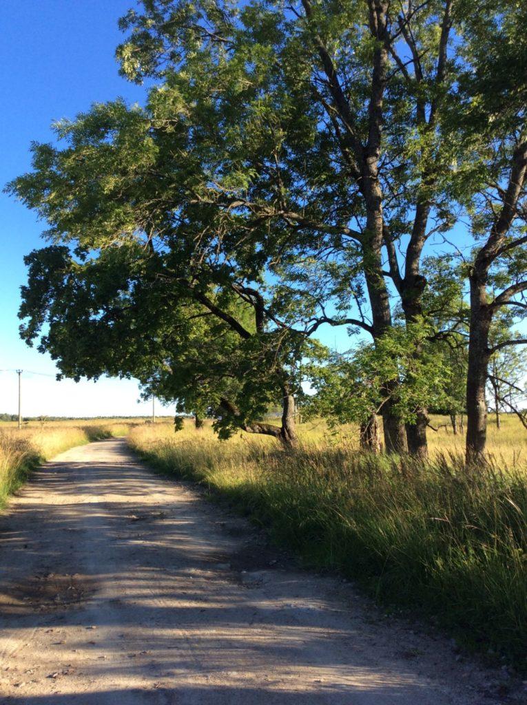 Грунтовые дороги окаймляют высокие парковые деревья воронинской усадьбы