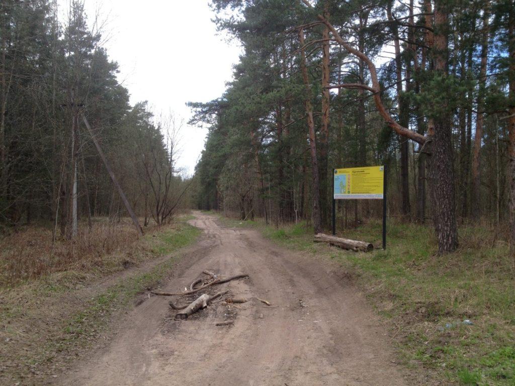 грунтовая дорога Большое Куземкино - пляж