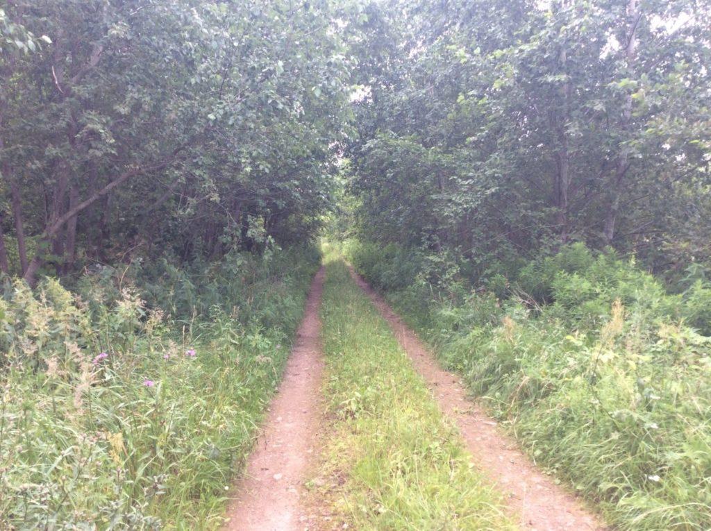 Дорога вдоль реки Россонь.