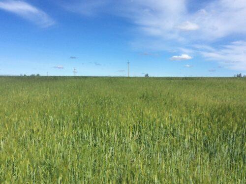 Вид полей в окрестностях Ямсковиц и Ополья