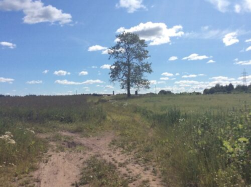 Братская могила жителей деревни Ямсковицы